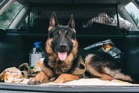 Transporte de Perros en Madrid